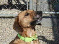 Hound - Camden - Large - Young - Male - Dog Meet