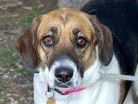 Hound - Cema - Large - Adult - Female - Dog Giant teddy