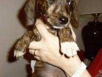 Hound - Chaos - Medium - Baby - Male - Dog My name is