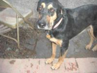 Hound - Daisy - Large - Adult - Female - Dog Daisy is a