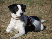 Hound - Daisy Mae - Medium - Young - Female - Dog I'm a