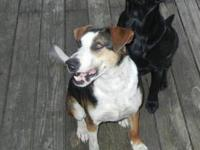 Hound - Damien (l) - Medium - Adult - Male - Dog Damien