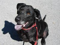 Hound - Darius - Large - Adult - Male - Dog Poor Darius