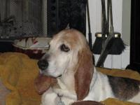 Hound - Deanna - Large - Baby - Female - Dog Our