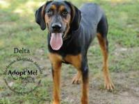 Hound - Delta #6929 - Large - Adult - Male - Dog Delta