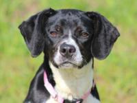 Hound - Denise - Medium - Adult - Female - Dog Hello my