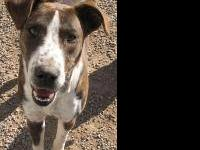 Hound - Diamond (allen Co) - Large - Adult - Female -