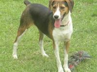 Hound - Dixie 2 - Small - Adult - Female - Dog Meet