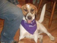Hound - Elvis - Medium - Adult - Male - Dog Good