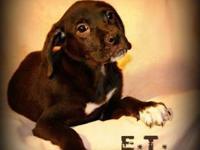 Hound - Et - Medium - Baby - Male - Dog Woof, woof! My