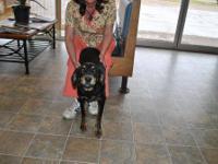 Hound - Gigi - Medium - Young - Female - Dog Gigi and