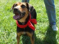 Hound - Gracie - Small - Young - Female - Dog Updated