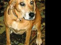 Hound - Grams - Large - Senior - Female - Dog Grams is