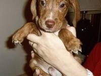 Hound - Hercules - Medium - Baby - Male - Dog My name