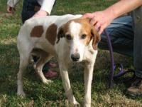 Hound - Holly (fc=dh) - Medium - Senior - Female - Dog
