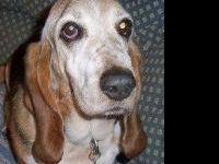 Hound - Hope - Large - Young - Female - Dog Please