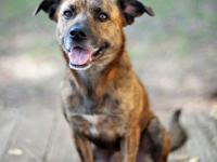 Hound - Jack Ny - Large - Young - Male - Dog Jack is a