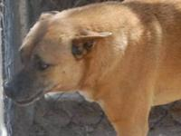 Hound - Jeff - Large - Adult - Male - Dog Jeff is a