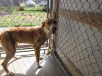 Hound - K12030 Emily - Medium - Adult - Female - Dog