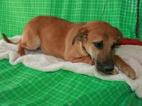 Hound - Kincaid - Large - Young - Male - Dog Kincaid