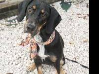 Hound - Lola - Medium - Baby - Female - Dog Sweet Lola