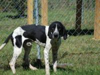Hound - Manny - Medium - Adult - Male - Dog Hi you all,