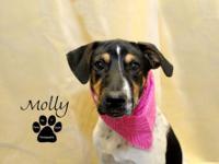 Hound - Molly - Medium - Baby - Female - Dog Molly is a