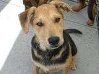 Hound - Monroe - Medium - Baby - Male - Dog MY ADOPTION