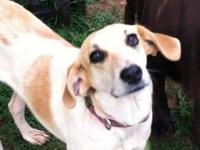 Hound - Moopsey - Medium - Adult - Female - Dog