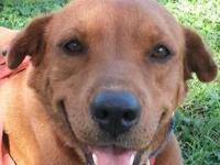 Hound - Ms Beasley - Medium - Adult - Female - Dog MS.