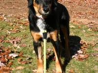 Hound - Nevada (trained) - Large - Young - Female -