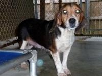 Hound - Nora - Medium - Adult - Female - Dog Contact