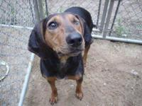 Hound - Odessa - Medium - Young - Female - Dog Sadly,