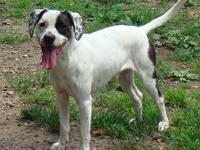 Hound - Patches Ny - Large - Young - Male - Dog Patches