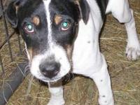Hound - Paxton - Large - Young - Male - Dog PAXTON: 1.5