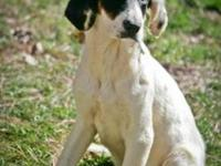 Hound - Payton - Medium - Baby - Male - Dog Payton is a