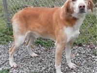Hound - Prince - Medium - Senior - Male - Dog If you