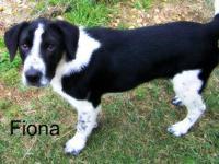 Hound - Princess - Medium - Young - Female - Dog