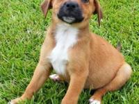Hound - Puppies And Young Dogs - Medium - Young - Dog