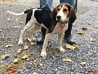 hound puppy's story This sweet boy will be making a