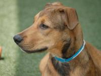 Hound - Raylene - Large - Young - Female - Dog