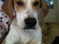 Hound - Rover - Large - Baby - Male - Dog Rover is one