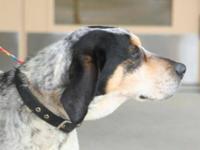 Hound - Ruff - Large - Adult - Male - Dog I'm sweet and