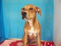 Hound - Sally Mae - Medium - Young - Female - Dog