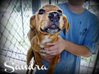 Hound - Sandra - Medium - Young - Female - Dog This