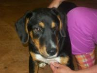 Hound - Scooby - Medium - Young - Male - Dog He is a