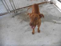 Hound - Sebastian - Medium - Young - Male - Dog