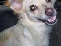 Hound - Sophie - Large - Adult - Female - Dog Hi my