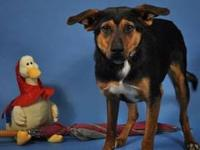 Hound - Sox - Medium - Adult - Female - Dog Sox is
