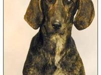 Hound - Speck - Large - Young - Female - Dog It pains